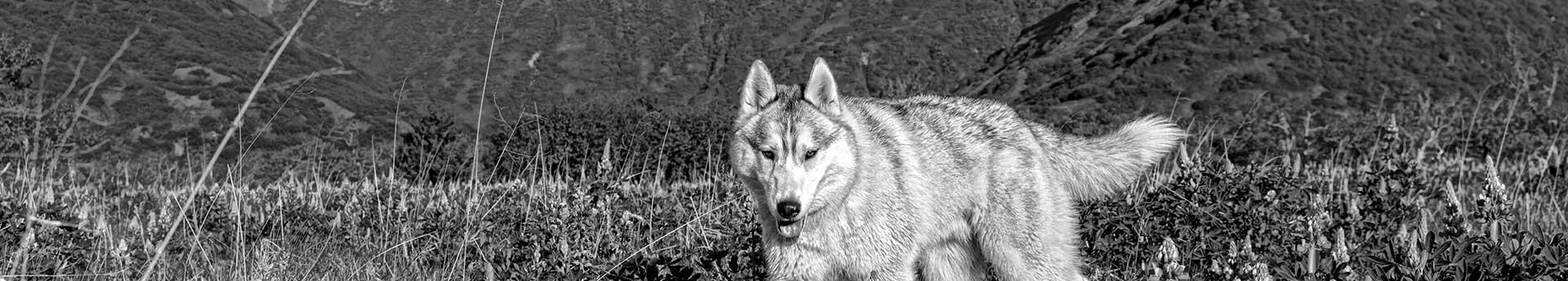 Confident Kalsin from Kodiak Island, Alaska